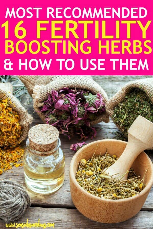 16 Fertility Herbs To Help You Get Pregnant Fast
